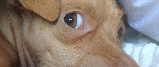 .PET: nuevo dominio para mascotas